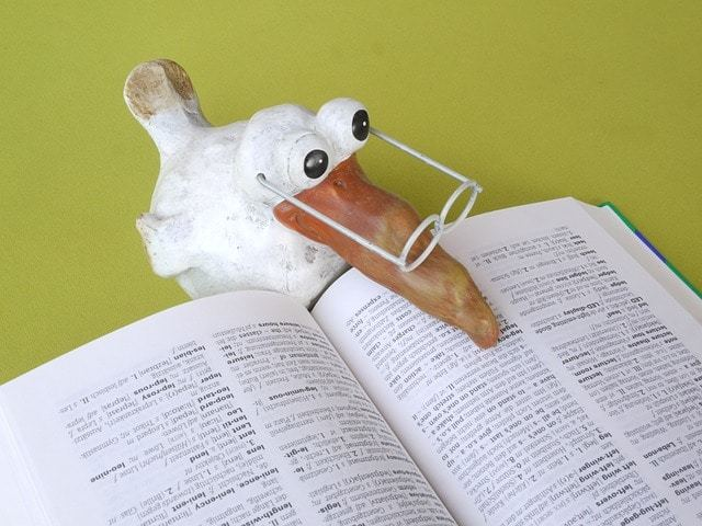 本を読む鳥
